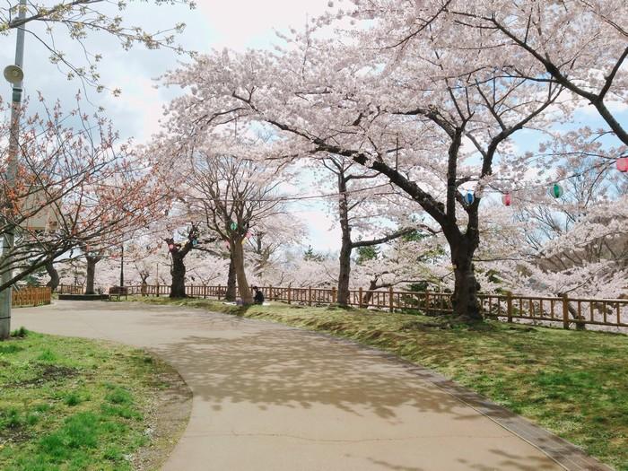 Tất cả các công viên trên đảo đều được nhuộm hồng màu hoa