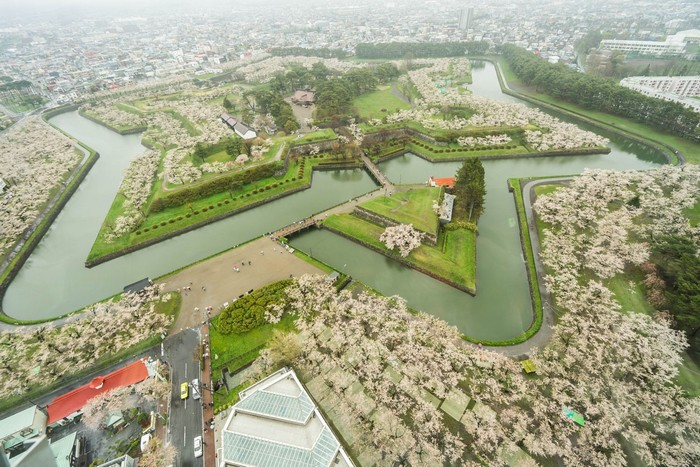 Hàng ngàn cây hoa anh đào nở rộ trong công viên Goryokaku (pháo đài ngôi sao)