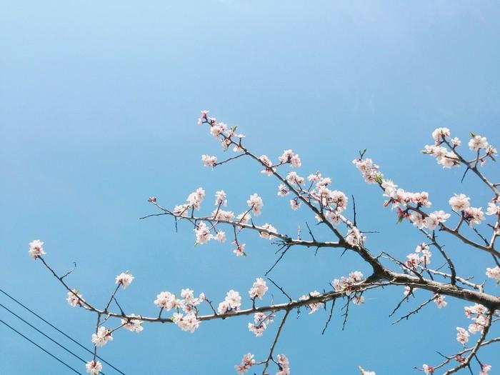 Loài hoa mong manh như đẹp tuyệt dưới nền trời xanh