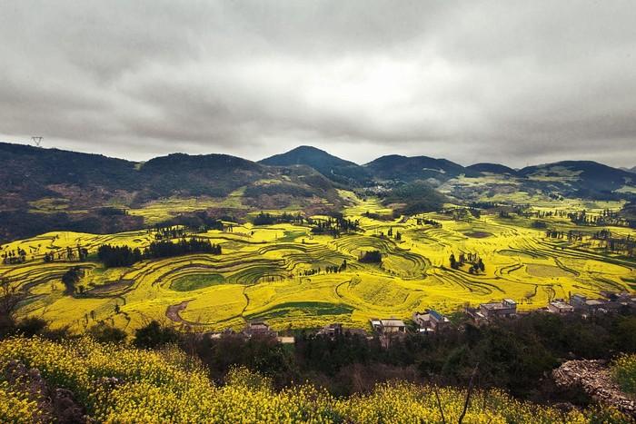 Những đường nét độc đáo của cánh đồng cải khi ngắm nhìn từ trên cao