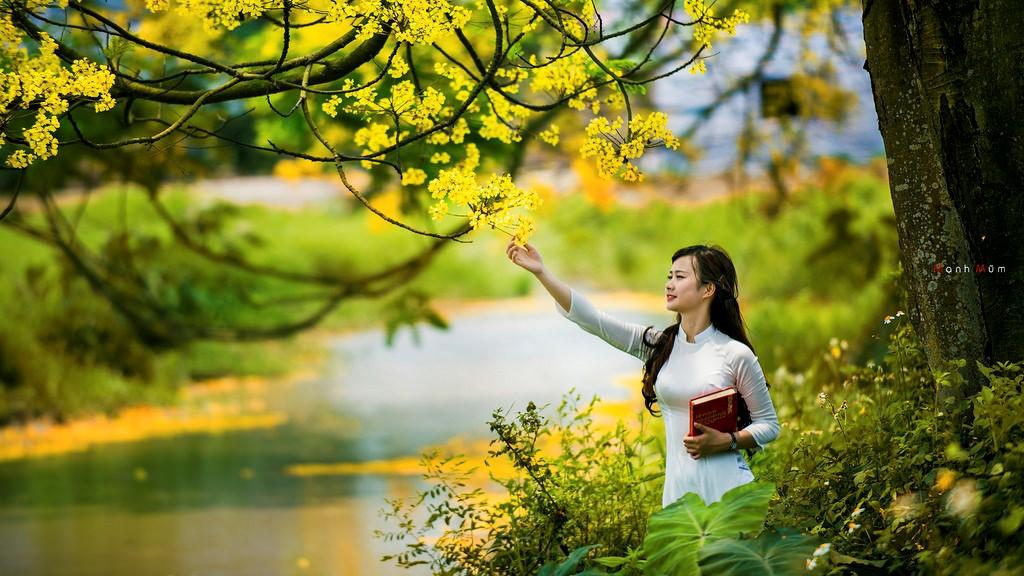 Khẽ chạm tay vào những cánh hoa mỏng manh, nhuộm vàng nắng hạ