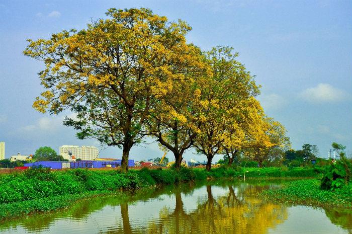 Dòng kênh xanh biếc, hoa điệp rực vàng