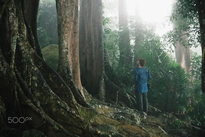 Bán đảo Sơn Trà – khu vườn bí ẩn