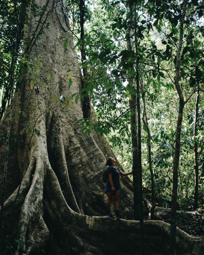 Những thân cây cổ thụ