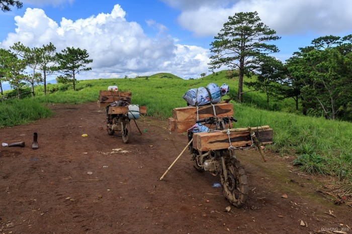 Vài chiếc xe chở gỗ trong rừng - Ảnh: Duy Hùng