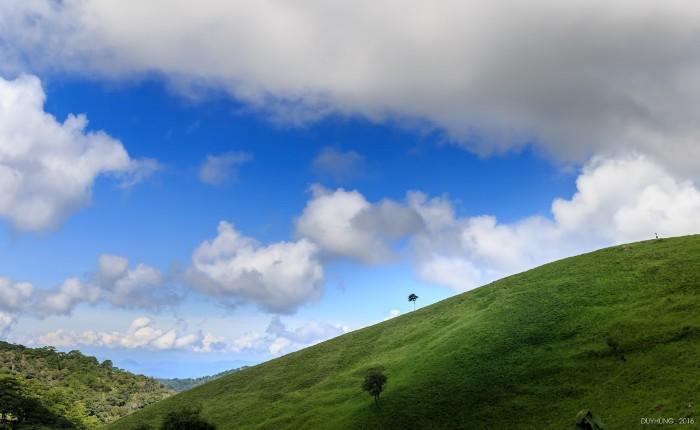 Đồng cỏ xanh tươi - Ảnh: Duy Hùng