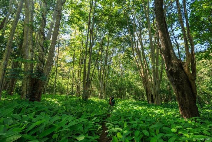 Đi qua màu xanh tươi mát của cây rừng - Ảnh: Duy Hùng