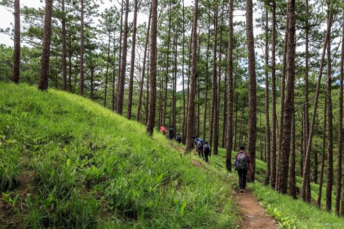 Ký ức về cánh rừng Tà Năng - Phan Dũng - Ảnh: Duy Hùng