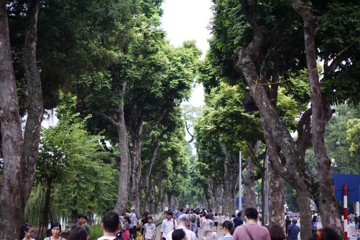 Cây xanh hai hàng mát mắt - Ảnh: Phúc Nguyễn