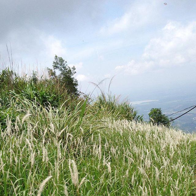 Đồng lau trên núi