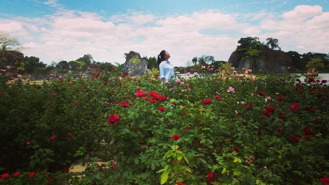 Vườn hoa rực rỡ