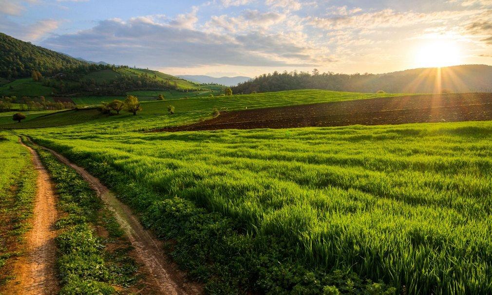 Những cánh đồng xanh mát ở thành phố Kiasar, phía bắc Iran.