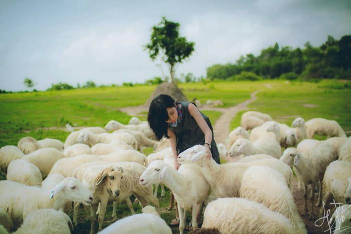 Ngang qua đồng cừu Suối Nghệ đẹp mê hồn - Ảnh: @hy.v.v