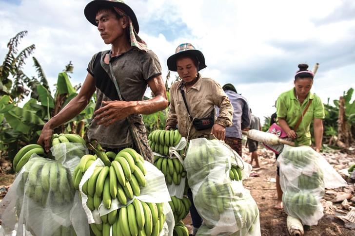 Người dân Bokeo thu hoạch nông sản