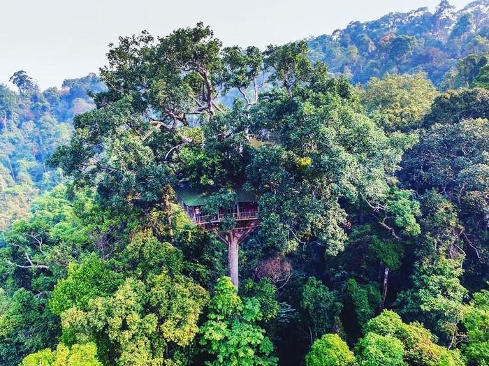 Nhà trên ngọn cây trong khu bảo tồn Bokeo