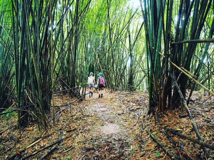 Khám phá rừng nguyên sinh