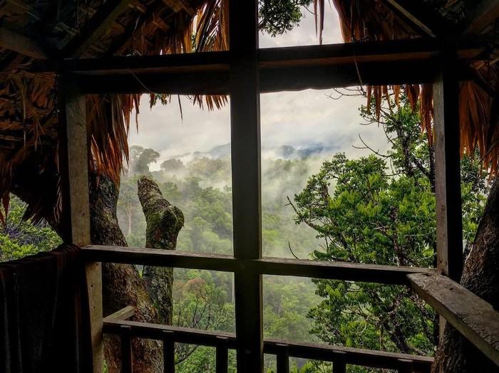 Ngắm thiên nhiên qua cửa sổ