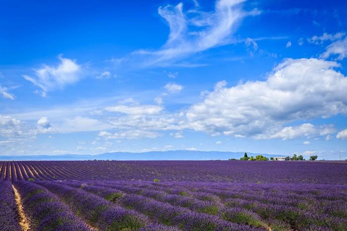 Thiên đường màu tím