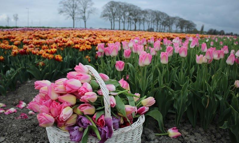 Làng Beemster ở Hà Lan nằm cách thủ đô Amsterdam 30 km về phía bắc.