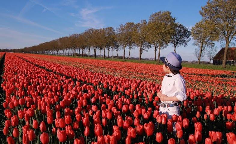 Ngoài thăm quan cánh đồng hoa tulip, du khách còn có thể chiêm ngưỡng những thắng cảnh nổi tiếng Hà Lan như cung điện Hoàng Gia, hải cảng Rotterdam, khu đồng quê Zaanse Schans...