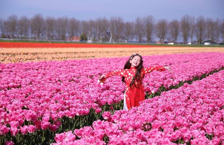 Đây cũng là thời điểm nhiều gia đình đưa con đi dã ngoại ngắm hoa và tận hưởng không khí trong lành ở khu ngoại ô.