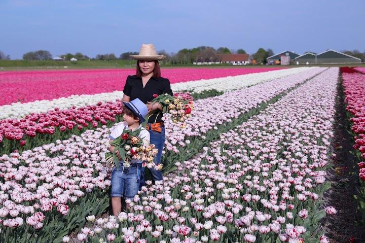 """Chị Lips Pham, Việt kiều sinh sống ở Hà Lan 30 năm chia sẻ: """"Tôi háo hức chờ đợi mỗi mùa tulip về để cả gia đình cùng đạp xe quanh làng, ngắm những cánh đồng hoa rực rỡ sắc màu, cùng chụp ảnh lưu niệm."""