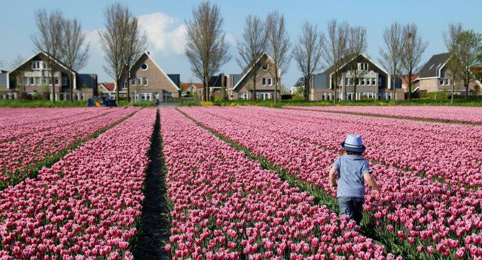 Bạn còn được thử trải nghiệm tham quan cánh đồng hoa tulip bằng máy bay trực thăng. Cảm giác nhìn cánh đồng hoa từ trên cao xuống giống như bức tranh đầy màu sắc, rất ấn tượng. Chi phí trải nghiệm này là 100 euro (2,5 triệu đồng) cho 10 phút hay 135 euro (3,3 triệu đồng) cho 15 phút.