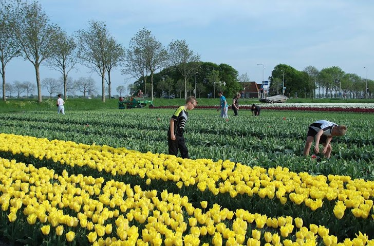 Khách tham quan có thể tham gia trải nghiệm chăm sóc hoặc mua cây giống về trồng.