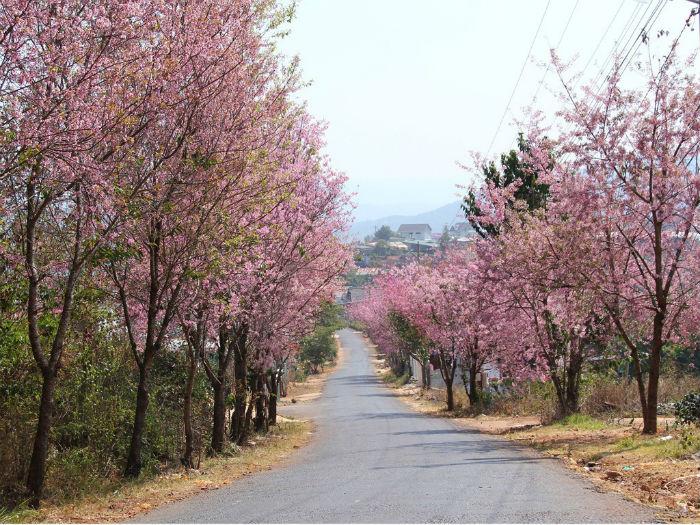 Còn có cả những con đường nhỏ rất đẹp mà bạn chưa biết đến