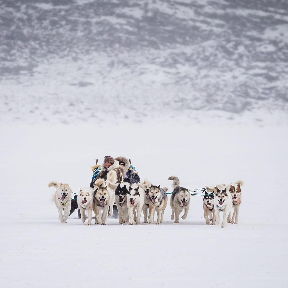 Những chú chó kéo xe trượt tuyết ở hòn đảo băng giá