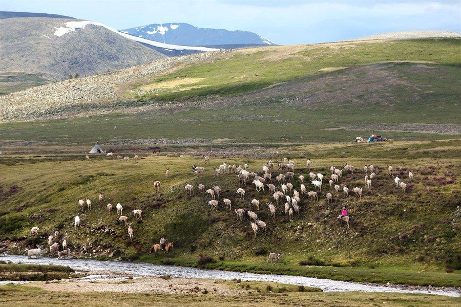 Cứ vài tuần, những người dân du mục di chuyển từ đồng cỏ này sang đồng cỏ khác, khoảng 5-10 lần mỗi năm.