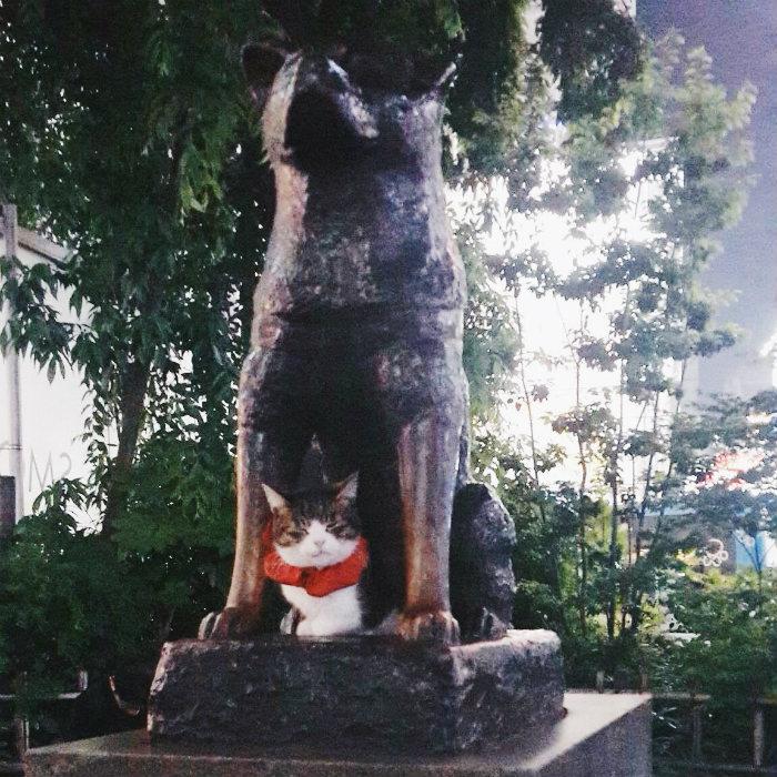 Bức tượng của chú chó Hachiko nổi tiếng trước ga Shibuya