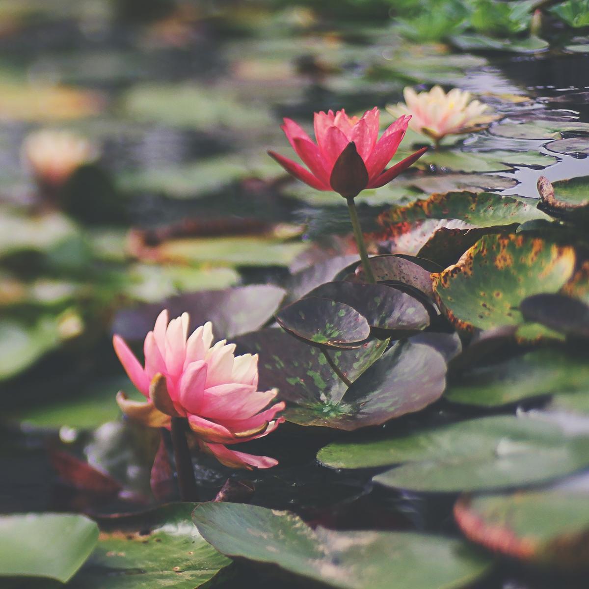 Mùa hạ Hà Nội cũng nên thơ và trữ tình lắm
