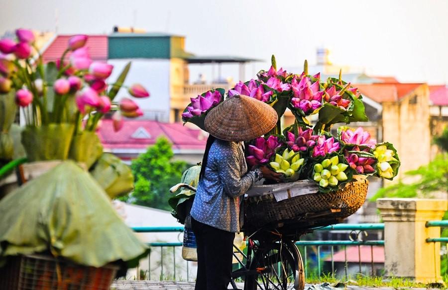 Hoa sen, nàng thơ của mùa hạ