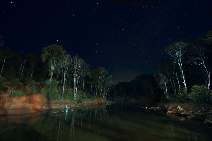 Những ánh sao nhấp nháy trong đêm ở rừng sâu