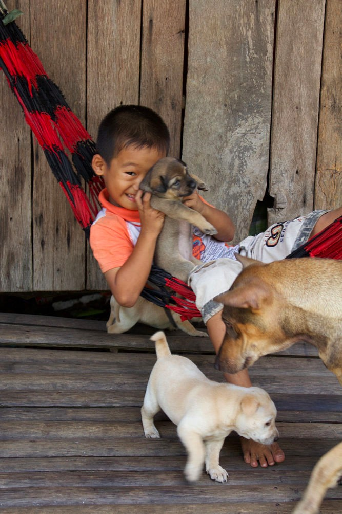 Những chú chó Phú Quốc vài tháng tuổi