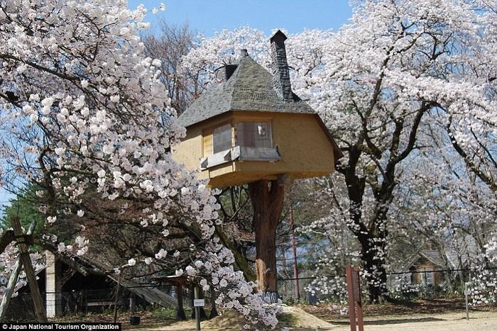 Ngôi nhà trên cây giữa vườn hoa anh đào thơ mộng ở Nhật Bản