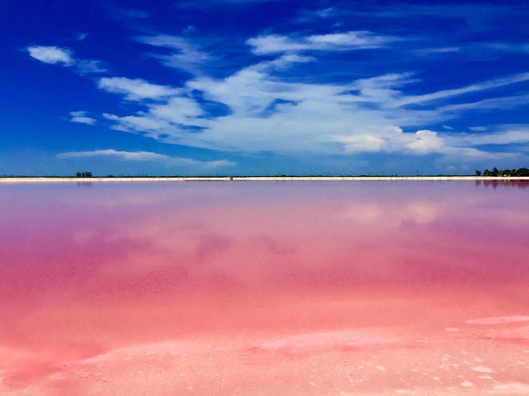 Màu hồng của hồ hoàn toàn tự nhiên