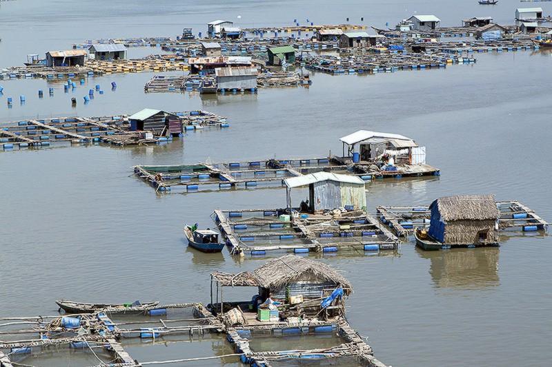 Xã đảo Long Sơn nổi tiếng với làng bè nổi ở Vũng Tàu