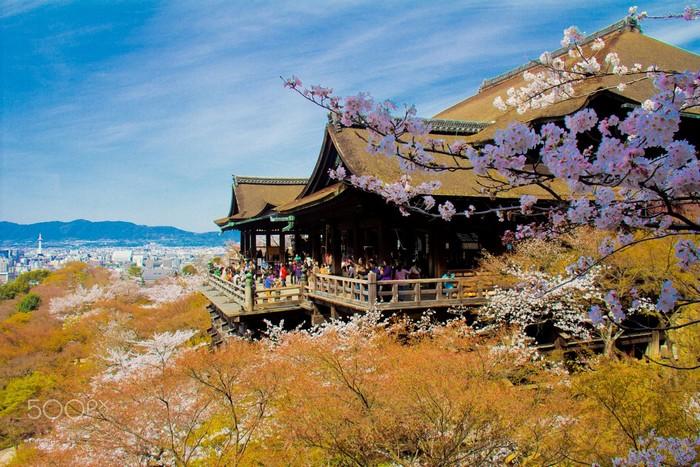Cảnh sắc bên chùa Kiyomizu vào mùa hoa anh đào