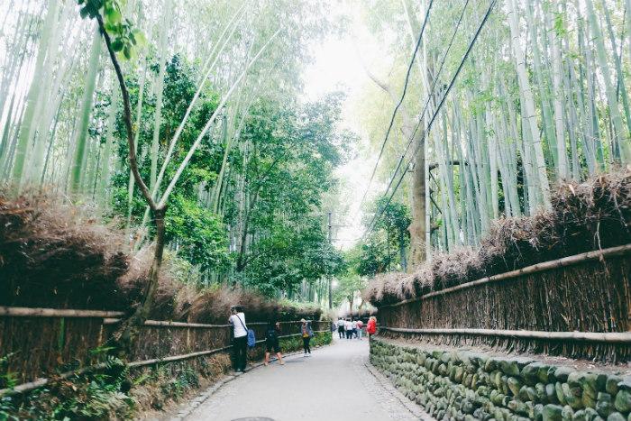 Con đường xanh mượt màu trúc