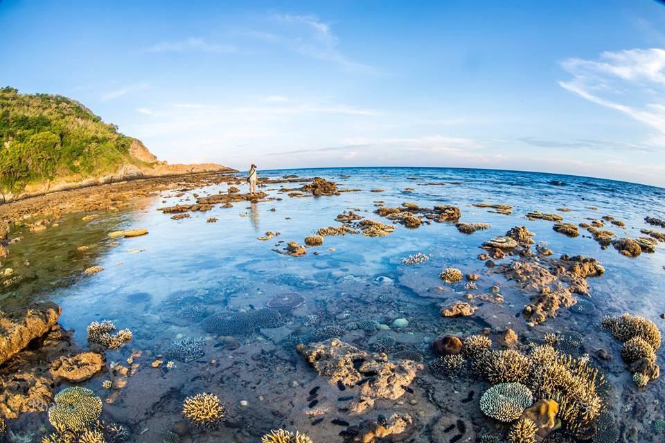 Rạo rực những xúc cảm khó tả khi được chiêm ngưỡng những rặng san hô ngay trước mắt