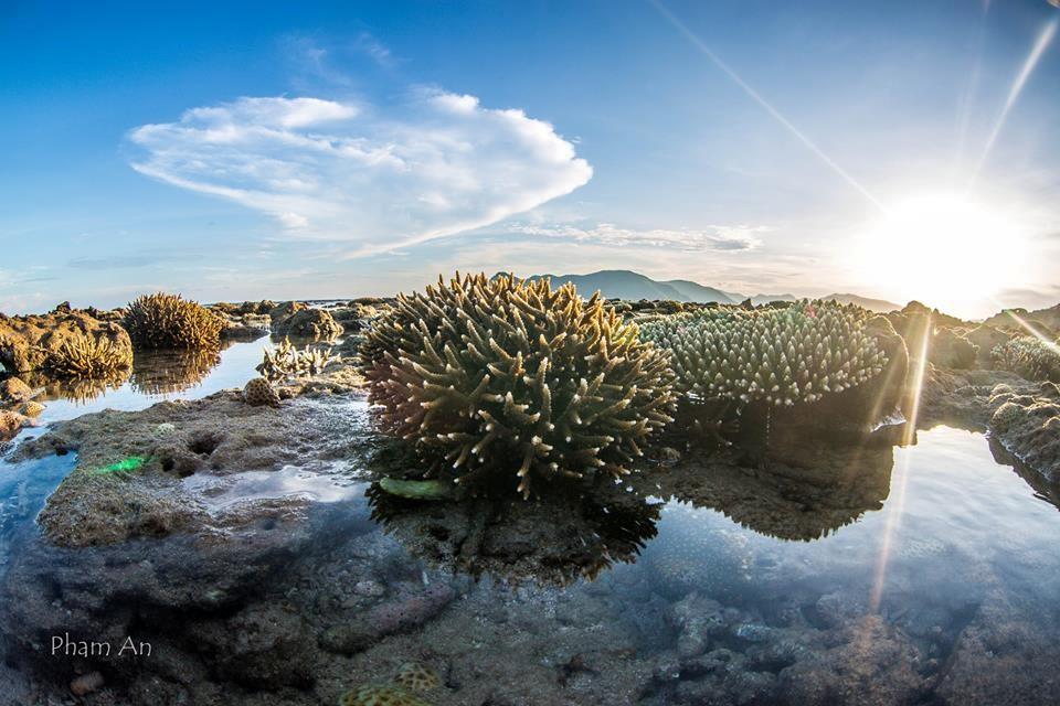 Những vạt nắng chiều soi chiếu san hô bừng sáng lấp lánh