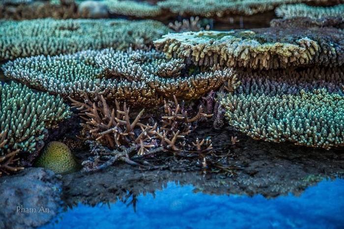 """Đến Hòn Cau thỏa sức """"săn"""" những bức ảnh san hô đậm chất nghệ thuật"""