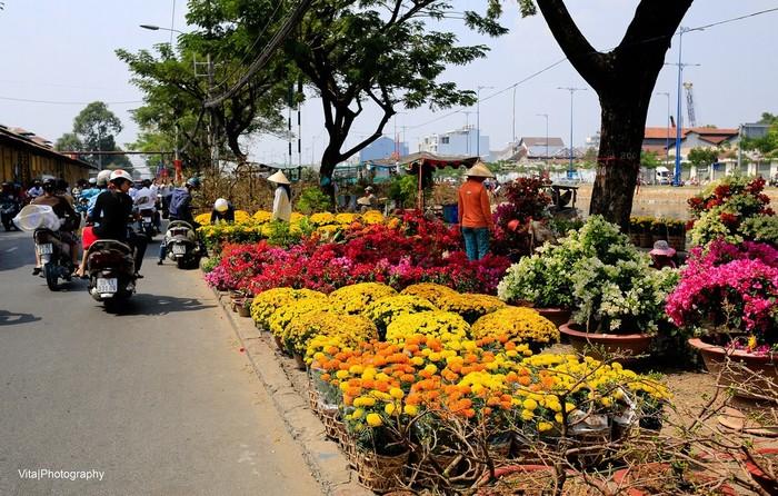 Những ngày giáp Tết, các loài hoa đua nhau khoe sắc trên đường phố Sài thành