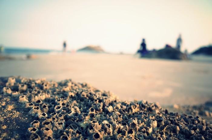 Lặng yên nghe hơi thở của biển