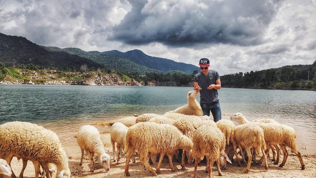 Nô đùa bên những chú cừu tại Hồ Đá Xanh
