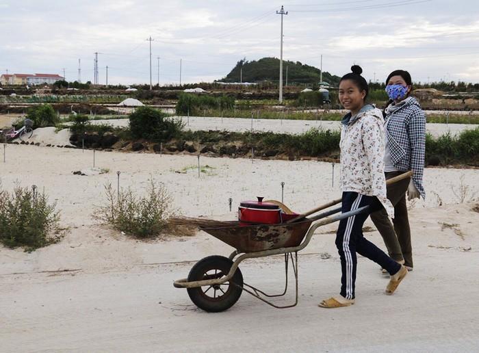 Sau tỏi, hành là cây trồng truyền thống của nông dân huyện đảo Lý Sơn, (Quảng Ngãi). Tại đây, hầu hết các gia đình đều ra đồng trồng hành và sống nhờ loại củ này.