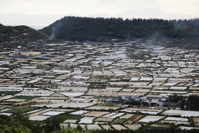 Lý Sơn có khoảng 130 ha hành tím được gieo trồng. Nhìn từ trên cao, các rẫy hành tím trông như những thửa ruộng được ngăn cách nhau bởi những con đê đầy cỏ xanh.