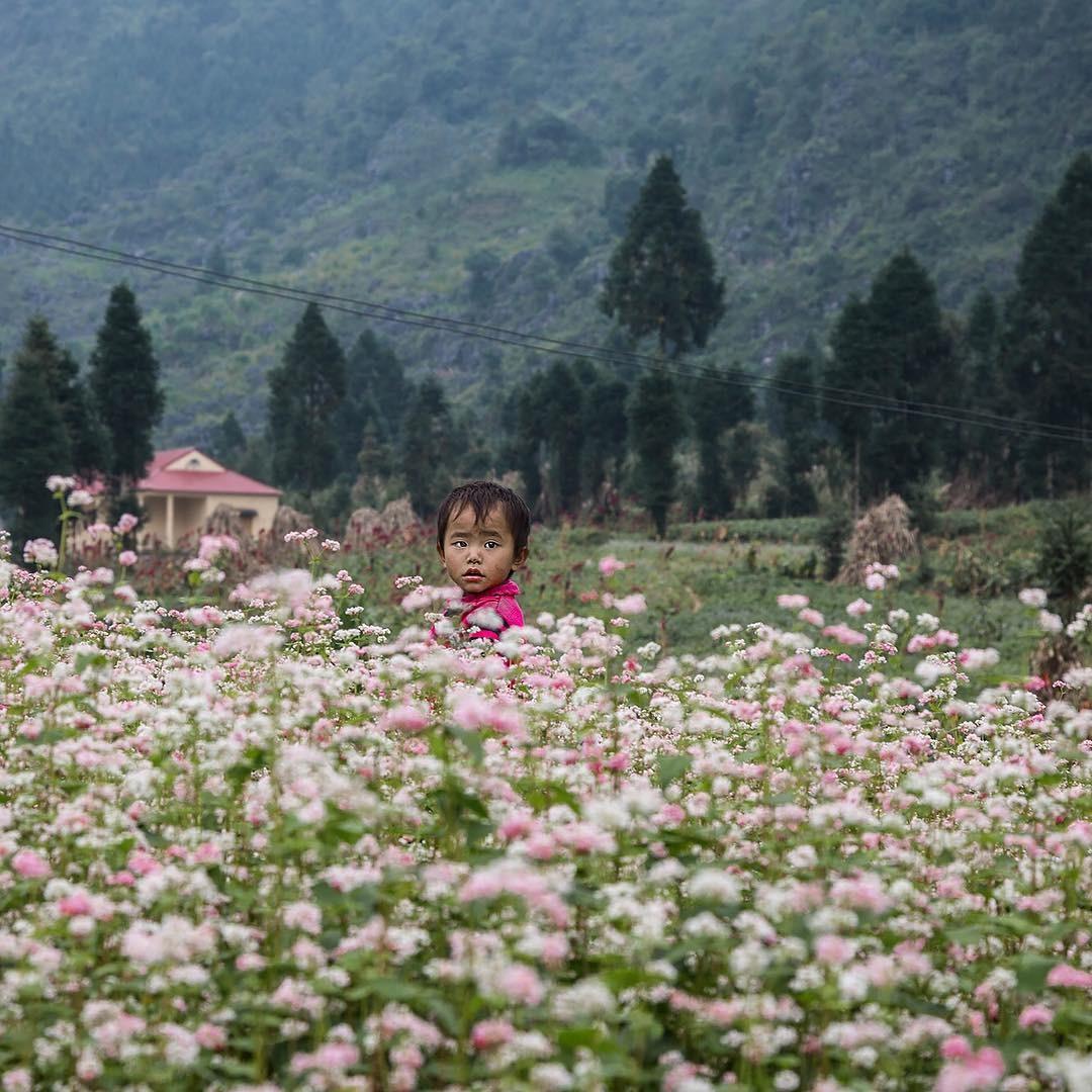Em bé Hà Giang giữa mùa hoa tam giác mạch